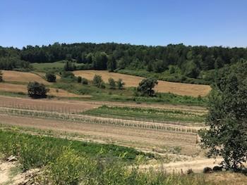 Campo cultivo 3