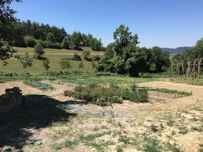 campo cultivo 1